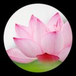 Spirituality Circle